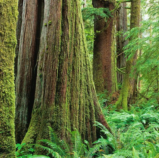 PPWC Statement On Old Growth Logging Vancouver Island