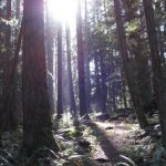 BC LAYS OUT PLANS FOR 'MODERNIZING' REGULATION  OF THE FOREST INDUSTRY